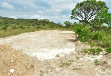 Seed supply strongly limits restoration of degraded areas of the biodiverse Brazilian campo rupestre.