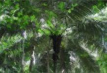Amazon Palm