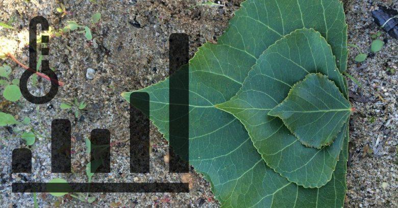 Bioenergy and Climate Change