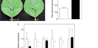 Ectopic expression of HaHB4 in transgenic soybean leaves enhances the asymmetric formation of secondary vein pairs.