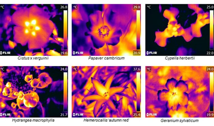 Floral thermographs demonstrating the range of floral temperature patterns observed.