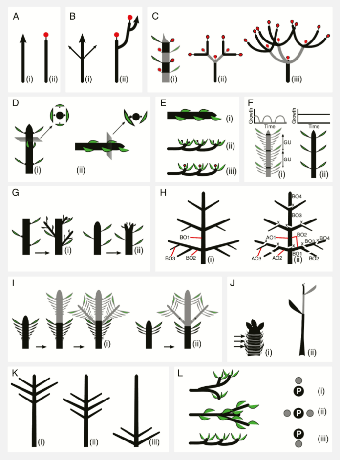 Main concepts in plant architecture.