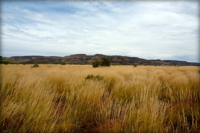 Arid grassland