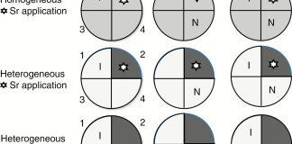 Schematic representation of the experimental design.