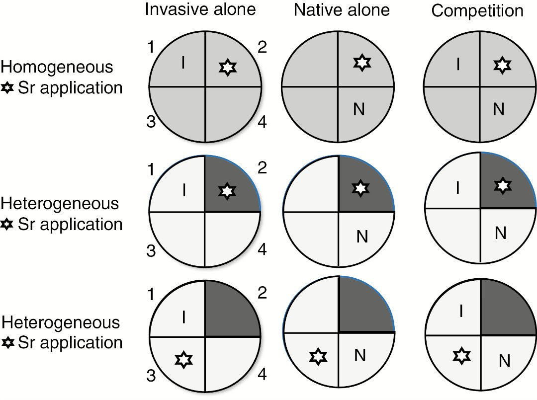Linking invasivenative plant competition to foraging and nutrient schematic representation of the experimental design pots were divided into four quadrants 1 2 3 and 4 each species within a species pair was grown ccuart Images
