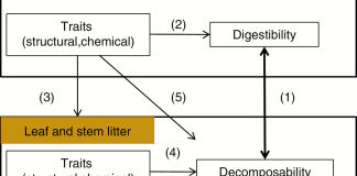 Scheme showing the putative links between traits of leaves and stems and the two degradation processes studied