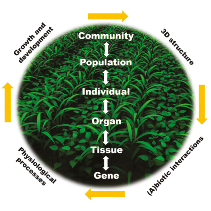 Advancing Plant Science Through Functional Structural Plant Fsp