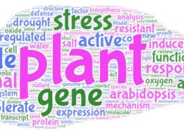 Words appearing in the titles of Citation Classics in Plant Sciences since 1992.
