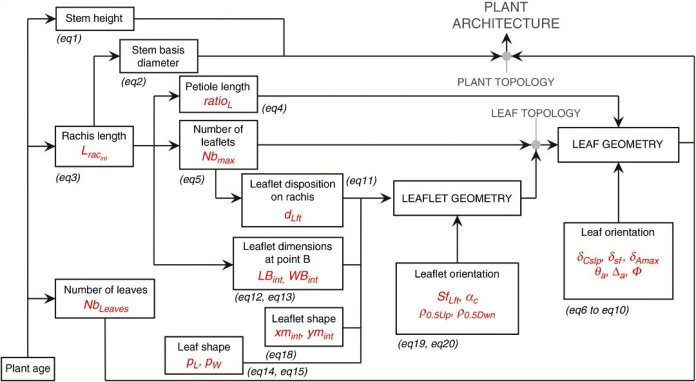 Allometry-based approach of the VPalm model