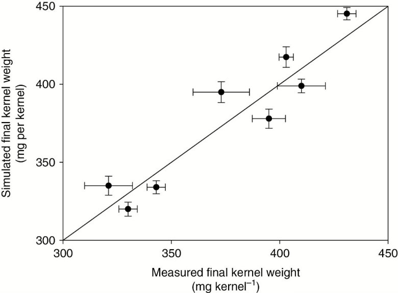 Simulated final kernel weight and measured final kernel weight for different genotypes.
