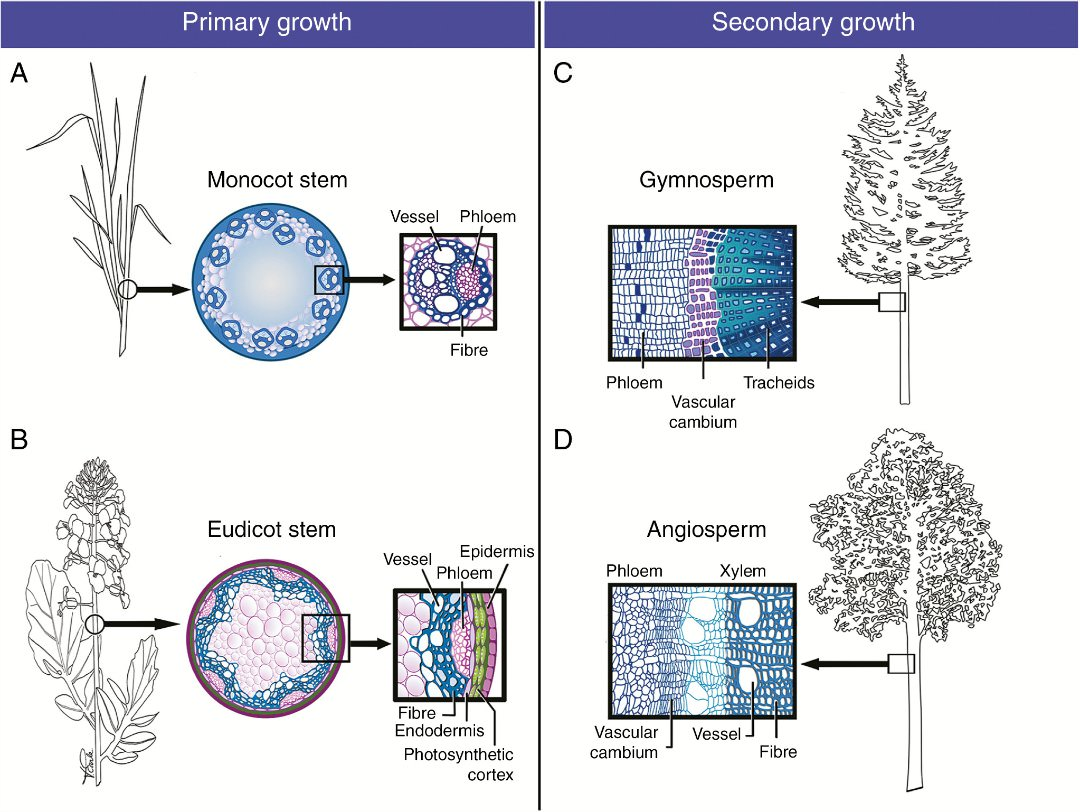 the cell biology of secondary cell wall biosynthesis botany one