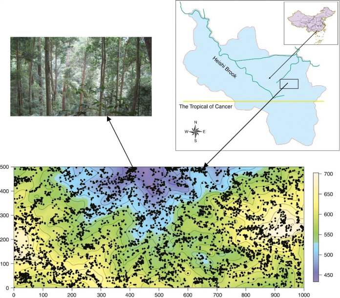 The geographical location of Heishiding forest plot and the distribution of 5335 sampled plants within the plot
