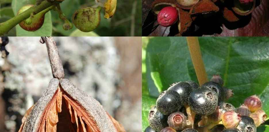 Plants of the Cerrado