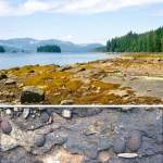 Cretaceous rocks on Vancouver Island (British Columbia)