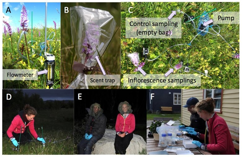 Scent sampling in the field: not so easy!