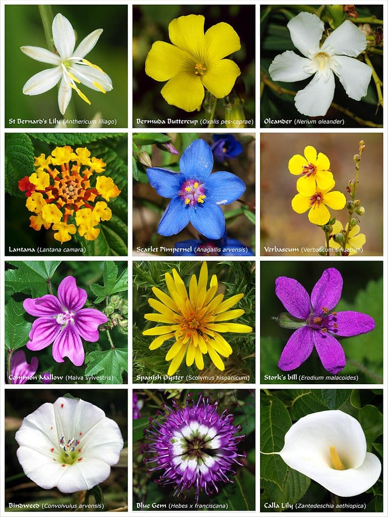 Flowers its what angiosperms are all about botany one izmirmasajfo
