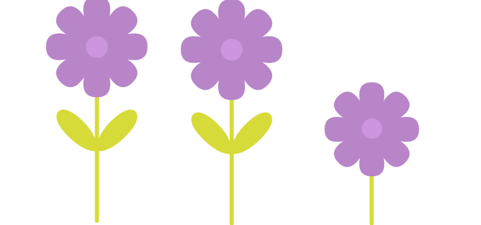 An attempt to show flower timing problems.