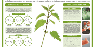 The Chemistry of Stinging Nettles