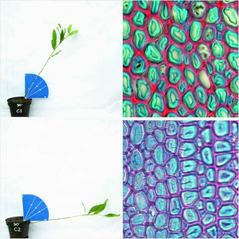 Tree seedlings tipped at various angles