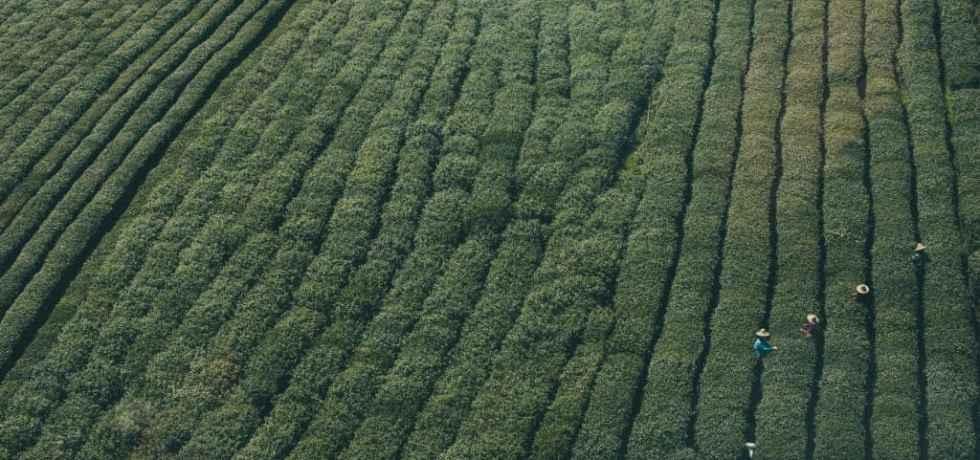 Crop Canopy