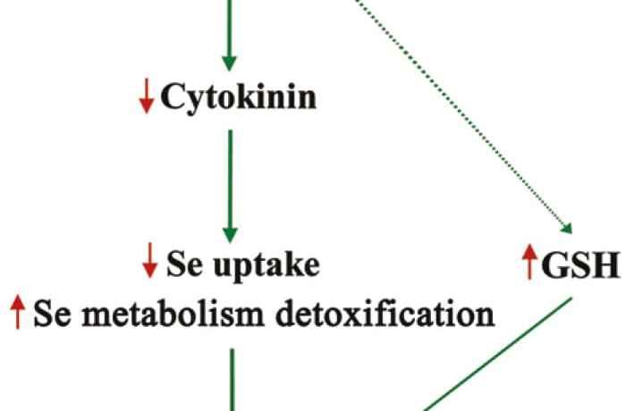 tps22 and selenium