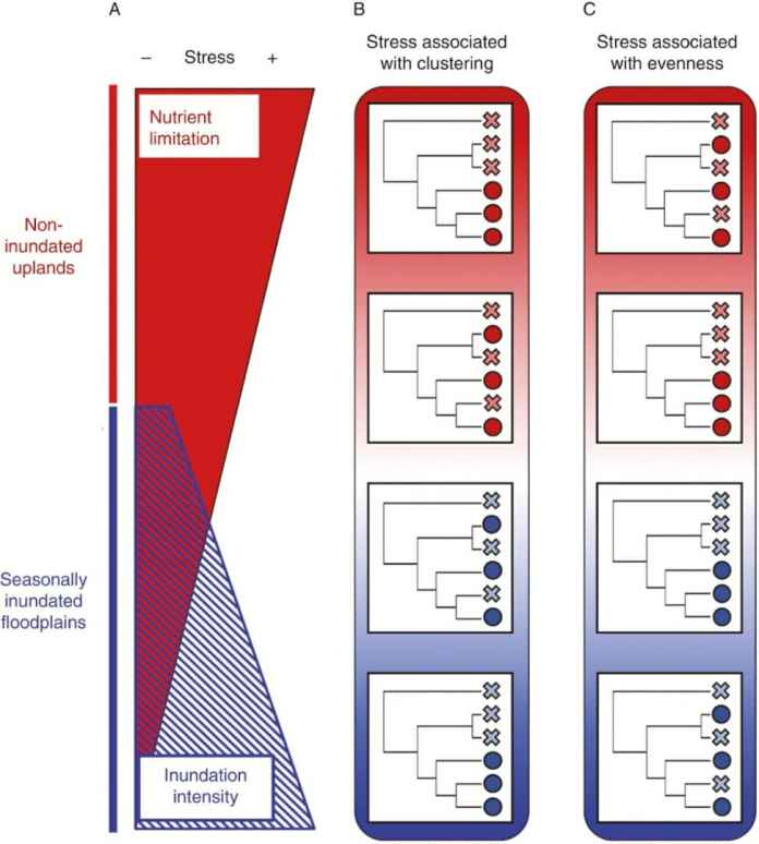 Physiological stress gradients can interact with evolutionary processes to mediate the phylogenetic composition of communities.