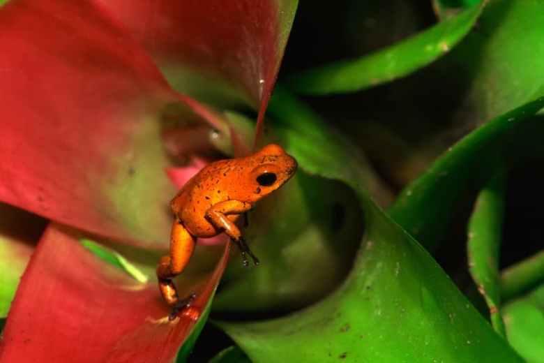 Bromeliad and frog