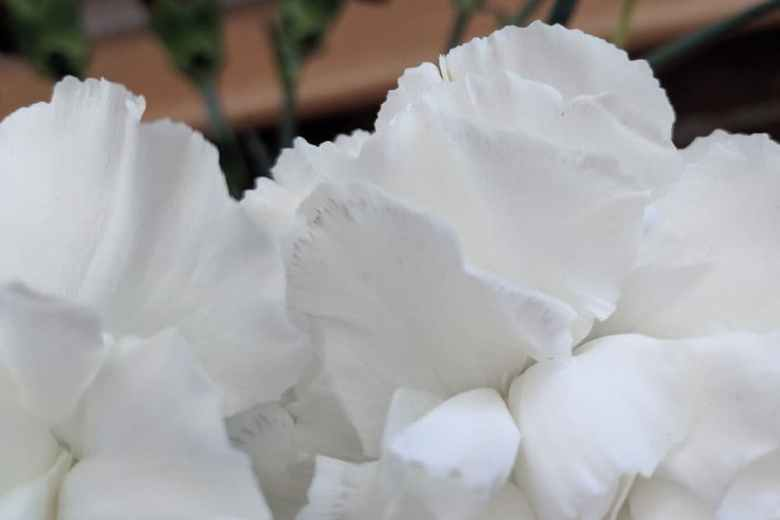 Petals with very small black markings