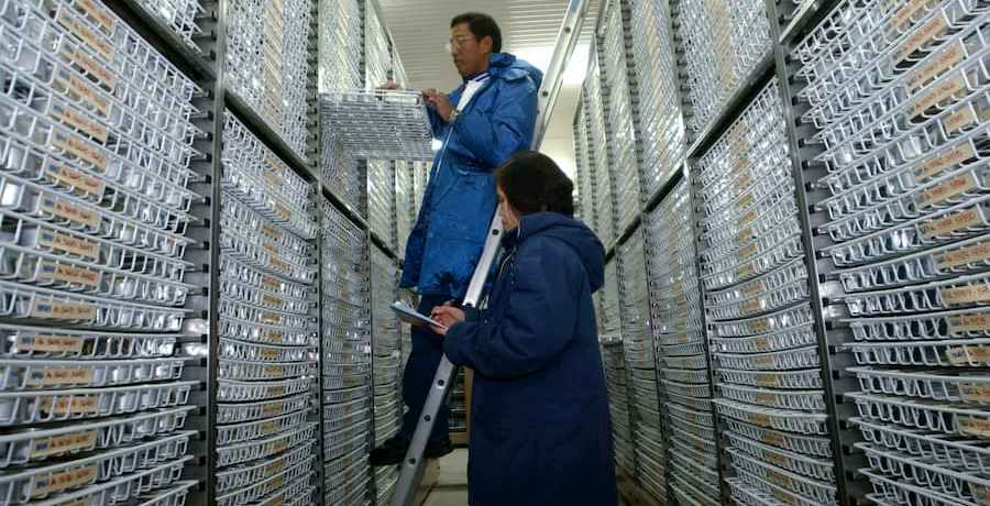 Inside the genebank