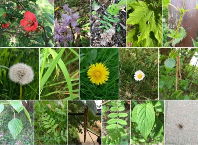 A mosaic of plants