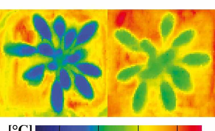 Leaf temperatures