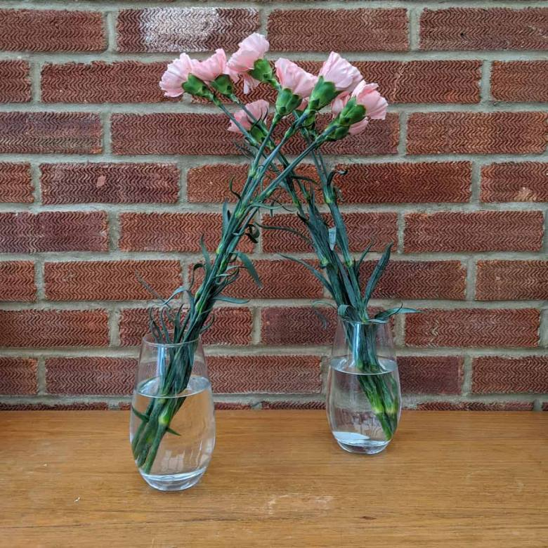 Two vases with flowers in. Neither looking particularly droopy.