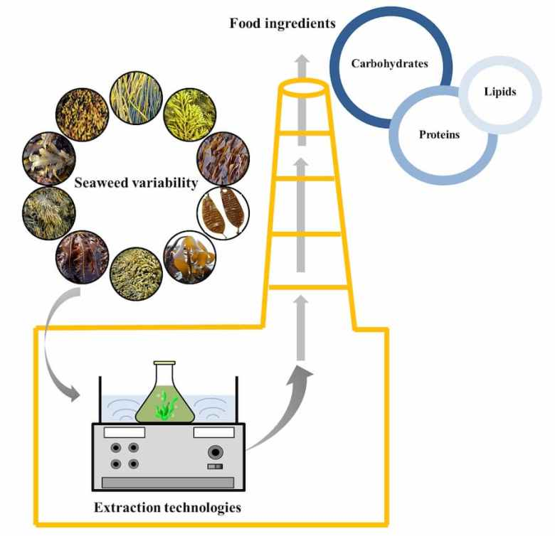 Diagram showing input from Seaweed Cariability, through the Extraction Technologies, to the output of Food Ingredients.