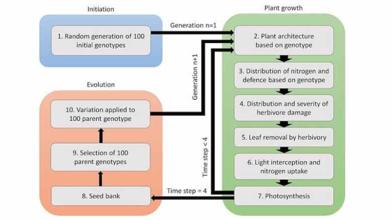 Diagram of herbivore pressure and plant development.