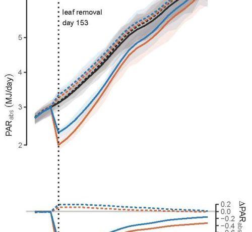 Absorbed PAR (PARabs) per vine and the 50 % highest density interval