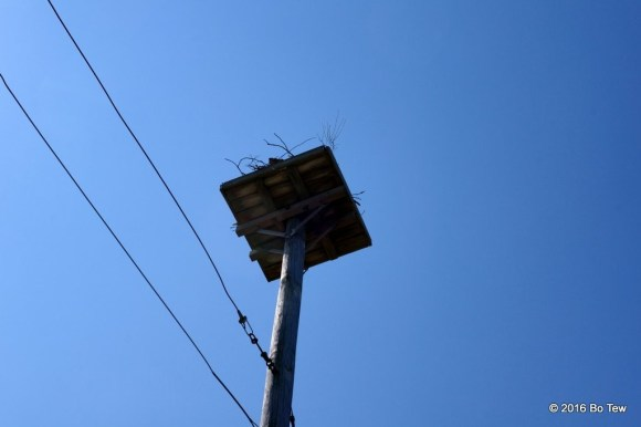 A bunch of these high poles with Ospreys making nest on them.