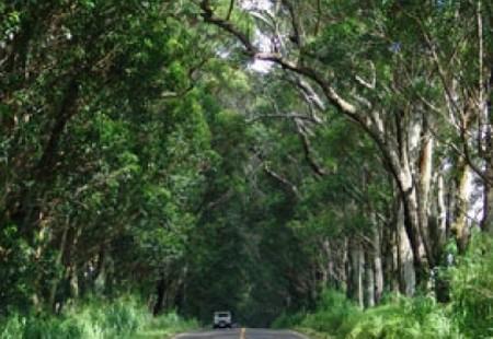 perdele forestiere