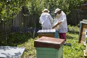 apicultori stupi albine botosani