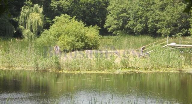 curatenie la Lacul cu nuferi din Ipotesti