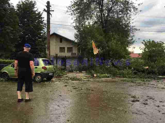 furtuna saveni- copac cazut peste masina
