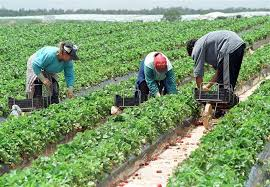 agricultura, locuri de munca, spania, stiri, botosani