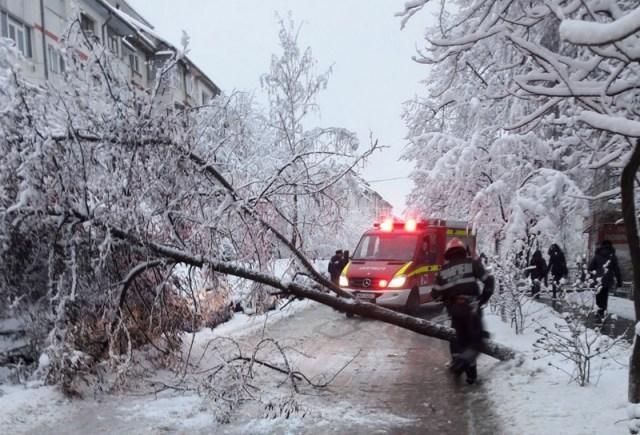copaci cazuti pe strada, stiri, botosani, strada savenilor