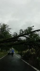 copac rupt, stiri, botosani, drum national