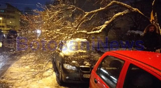BMW distrus de copac, stiri, botosani