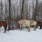 botezul cailor, paltinis , stiri , botosani