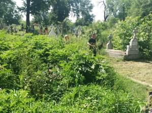 morminte acoperite de buruieni la Cimitirul Eternitatea din Botosani