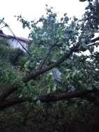 copaci distruti