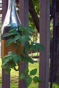 Plants growing inside glass bottles | How To Make A Bottle ...