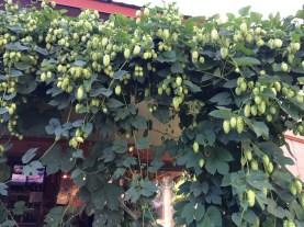 Pagosa Brewing Co