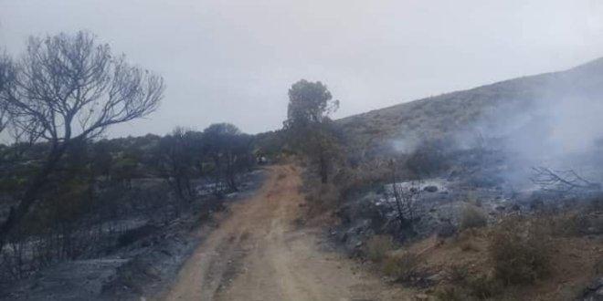 اندلع حريق بغابة سيدي عمر بمقاطعة الغابات بحمام الضلعة